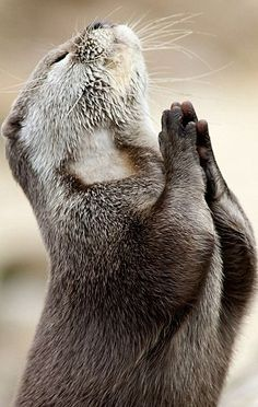 I am thankful for this otter.