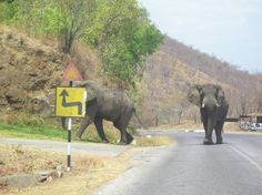 Elephants on the move. They had the right of way which took 20 minutes only!!