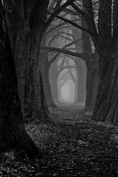 The dark forest path. The dark forest path Forest Path, Dark Forest, Foggy Forest, Magic Forest, Forest Road, Into The Forest, Forest Scenery, Night Forest, Forest Trail