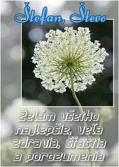 Štefan, Števo Želám všetko najlepšie, veľa zdravia, šťastia a porozumenia Dandelion, December, Flowers, Plants, Dandelions, Plant, Taraxacum Officinale, Royal Icing Flowers, Flower