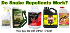Do Mothballs Keep Away Snakes? Snake Repellant, Keep Snakes Away, Insect Pest, Big Garden, My Secret Garden, Moth, How To Get, Yard Ideas, House Plants