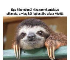 Funny Photos, Cute Pictures, Funny Pins, Animal Memes, Predator, Funny Cute, Dankest Memes, Funny Jokes, Cute Animals