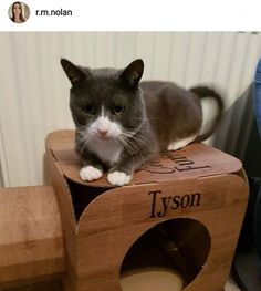 Tyson is so sweet  thank you so much to @r.m.nolan for this adorable photo   #cat #catsofinstagram #cats_of_instagram #catfurnature #catfurniture #catsinboxes #cattoy #INSTACAT_MEOWS #cutecat #PurrMachine #catsinboxes #catbox #Excellent_Cats #BestMeow #dailykittymail #thecatniptimes #catcube #catpod #ArchNemesis #FlyingArchNemesis #myindoorpaws #ififitsisits #cutecatcrew #catchalet #catnip #themeowdaily #kitty #dailykittymail #catgrass