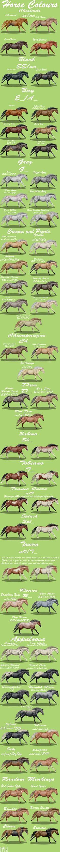 http://magicwindsstables.deviantart.com/art/Horse-colours-complete-358513466