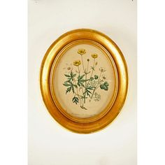 Mid Century Buttercup Flowers Print Gold Frame by TheHeartTheHome