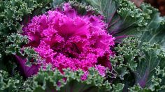 """The National Garden Bureau announced the four winners of """"Plants of the Year""""."""