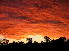 Sunset in the Australian bush by BronwynParry186 - Available on RedBubble