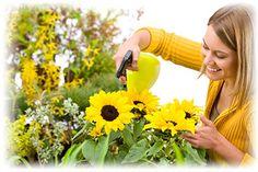 Kukkien ja kasvien hoito-ohjeet