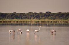 Ravenna seems a lot like paradise. #nature #flamingos
