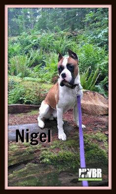 "Nigel: ""Thank you NWBR for loving me, keeping me safe, and for finding a family that is perfect for me."""
