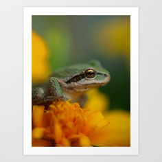Frog In The Forest... Art Print by Machel Spence   Society6