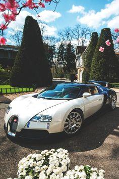 Bugatti in creme weiß - fablife.de