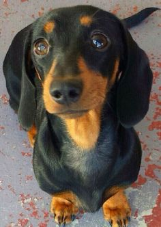 ❤️ The sweetest soulful eyes