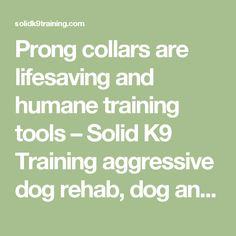Prong collars are lifesaving and humane training tools – Solid K9 Training aggressive dog rehab, dog anxiety