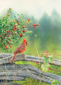A085676126:Rosy Outlook - Northern Cardinal Painting by Susan Bourdet