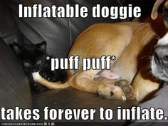 halloween funny pictures and captions | Cute and Pet Animals: funny dogs - Google Search