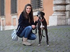 In this post there is a special Greyhound Galgo and his rescue story. He was one of the greyhound galgos rescued from Spain.