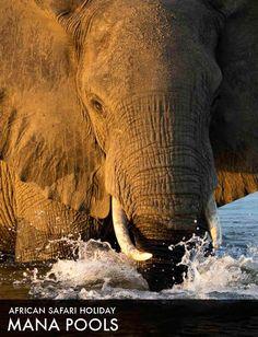 African Safari Tour 2015: Mana Pools
