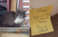 cat rescued from crack house