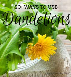 ways to use dandelions! - Simply Healthy Home Edible Plants, Edible Garden, Edible Flowers, Healing Herbs, Medicinal Herbs, Be Natural, Natural Healing, Herbal Remedies, Natural Remedies