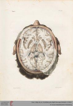 Brain CS
