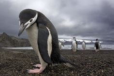 A Beginner's Guide To Seabirds