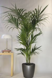 1000 images about house plants on pinterest interior Tall narrow indoor plants