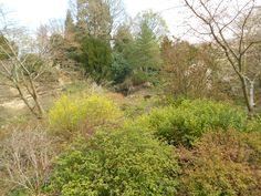 Scotney Castle - The Quarry Garden.