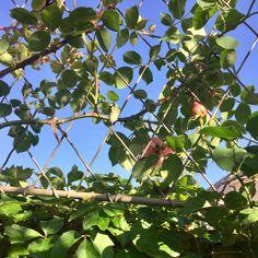 Wall trellis panels for climbing plants. Metal trellis with diamond lattice wirework. Garden Trellis Panels, Wall Trellis, Metal Trellis, Trellis Fence, Door Canopy Porch, Porch Doors, Porch Awning, Front Porch, Door Canopy Designs