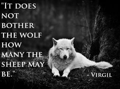 ~Wolf Quotes~ The price of being a sheep is boredom. The price of being a wolf is loneliness. Choose one or the other with great care. Game Of Thrones, White Wolf, Black And White, Gray Wolf, Wolf Black, Grey Wolves, Wolves Art, Black Sheep, White Fur