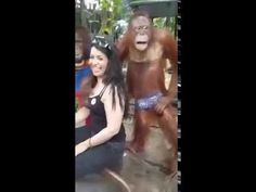 Chimpanzee Romance with a girl