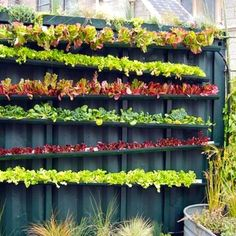 Perfect for my strawberries too! The darn bunnies might not be able to reach them if they are hanging up like this. Use gutters and plant a variety of lettuces. The water run off from the top gutter will trickle down to the lower lettuce beds.