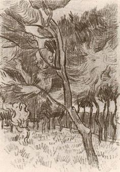 """Pine Trees in the Garden of the Asylum, 1889 Vincent van Gogh """