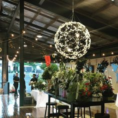 """A beautiful image of a David Trubridge Manuka pendant light in the """"wild"""", taken at the new Gulliver New Zealand showroom. Click image for where to buy!"""