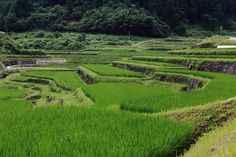 乙大木谷の棚田 : 四季の彩り