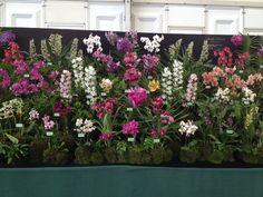 Hampton Court Flower Show 2014