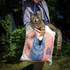 Lil Bub  Photo via Lil Bub on Facebook