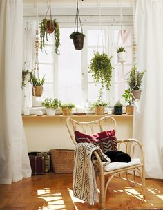 Le piante da interno offrono numerosi benefici - IKEA
