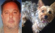 RHODE ISLAND... man NICOLA PATHALANO jailed for beating  to death MISSY the Yorkshire terrier | Daily Mail Online