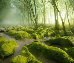 Rozprávková krajina sa nachádza aj v Európe a je ňou Rumunsko Beautiful Forest, Beautiful World, Beautiful Places, Amazing Places, Amazing Things, Wonderful Places, Landscape Photography, Nature Photography, Amazing Photography