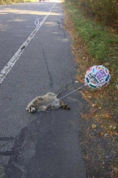 Get Well Soon Roadkill. I know this is so wrong...but I actually laughed out loud! I'm sorry if you're offended!!
