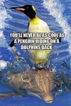 イルカ ペンギン*No matter what you say, a penguin surfing on a dolphin. It makes your argument invalid. Animals And Pets, Baby Animals, Funny Animals, Cute Animals, Wild Animals, Exotic Animals, Nature Animals, Animal Memes, Vida Animal