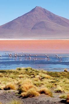 Laguna Colorada. Der See hat seinen Namen aufgrund seiner auffälligen roten Färbung, die von der vorherrschenden Algenart und vom hohen Mineralstoffgehalt seines Wassers hervorgerufen wird.