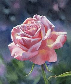 """SONG OF LOVE rose floral watercolor painting"" - Original Fine Art for Sale - © Barbara Fox"