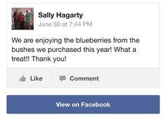 DiMeo Farms Blueberry Plants Review