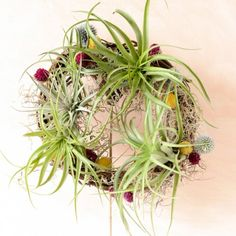 Air Plant Wreaths Are So Simple To Make And Look Gorgeous! With Just A Few