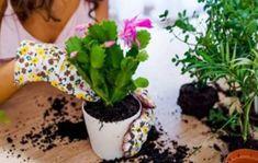 Přírodní hnojiva jsou nejenom pro pokojové rostliny to nejlepší. Ukážeme vám, kolik jich máte doma a Plants, Plant, Planets