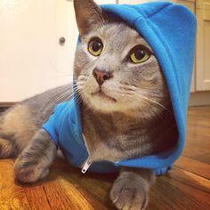The Cats Of Instagram @catsofinstagram   Websta