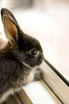 ❤️ Cutie #Baby_Bunny