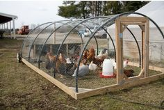 Hoop Style Chicken Tractor #chickens #homestead More Hoop style for outdoor cat enclosure